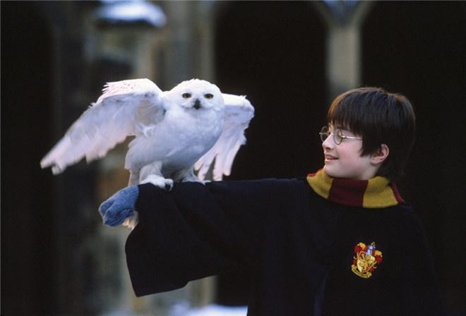 《哈利·波特与魔法石》曝全新预告 预售正式开启