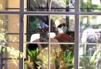 """当地时间8月11日,美国圣巴巴拉,""""水果姐""""凯蒂·佩里和未婚夫""""开花""""奥兰多·布鲁姆出街去看房,即将生产的水果姐一路被开花小心呵护。"""