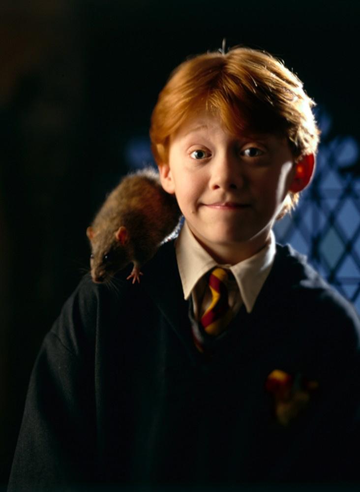 《哈利·波特与魔法石》票房瞩目 哈迷点燃暑期档