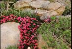 8月25七夕情人節,趙麗穎浪漫田園寫真發布。度假大草帽搭配粉色吊帶上衣和白短褲,滿屏溫柔典雅氣息,盡顯清新氣質。甜蜜七夕,快來接收麗穎的浪漫禮物吧!