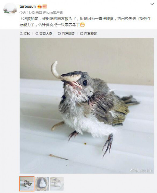 皇冠注册平台:孙俪再次分享生涯中的趣事 晒出被救助小鸟照片