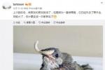 孙俪再次分享生活中的趣事 晒出被救助小鸟照片