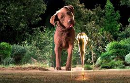 外星人还没一只狗子大,却想占领地球,一部搞笑科幻电影