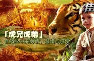 《虎兄虎弟》影评:与猛虎对视 感受自然中的亲情与深爱
