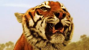 佳片有约《虎兄虎弟》片段:为何动物影片能让人类共情?