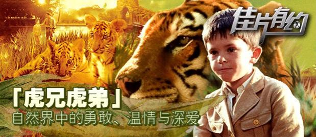 【佳片有约】《虎兄虎弟》片段:为何动物影片能让人类共情?