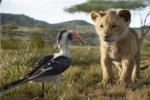 真人版《狮子王》将拍续集 《月光男孩》导演执掌