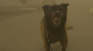 小心恶犬!灾难片《呼吸》曝新片段 生存难度升级