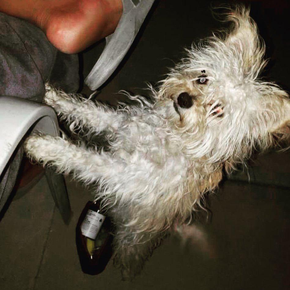 奥兰多·布鲁姆领养新狗子晒照 难舍爱犬Mighty 第3张