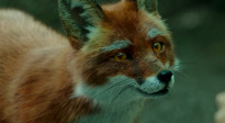 电影《赤狐书生》发布群妖特效特辑