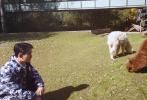 """11月23日,工作室曬出一則朱一龍日常vlog。視頻中,朱一龍在拍攝現場偶遇三只可愛的羊駝,并上前想與他們親近。結果卻遭到其中一只脾氣不好的羊駝""""攻擊"""",差點被吐口水。隨后,朱一龍偷偷跟工作人員""""吐槽"""":有一只脾氣不太好,它朝我吐口水,就這只!一臉委屈的朱一龍十分可愛!"""