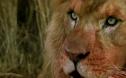 【佳片有約】佳片有約《暗夜雄獅》:影片如何營造懸疑緊張的刺激感?