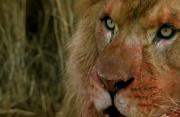 佳片有约《暗夜雄狮》片段:影片如何营造悬疑紧张的刺激感?