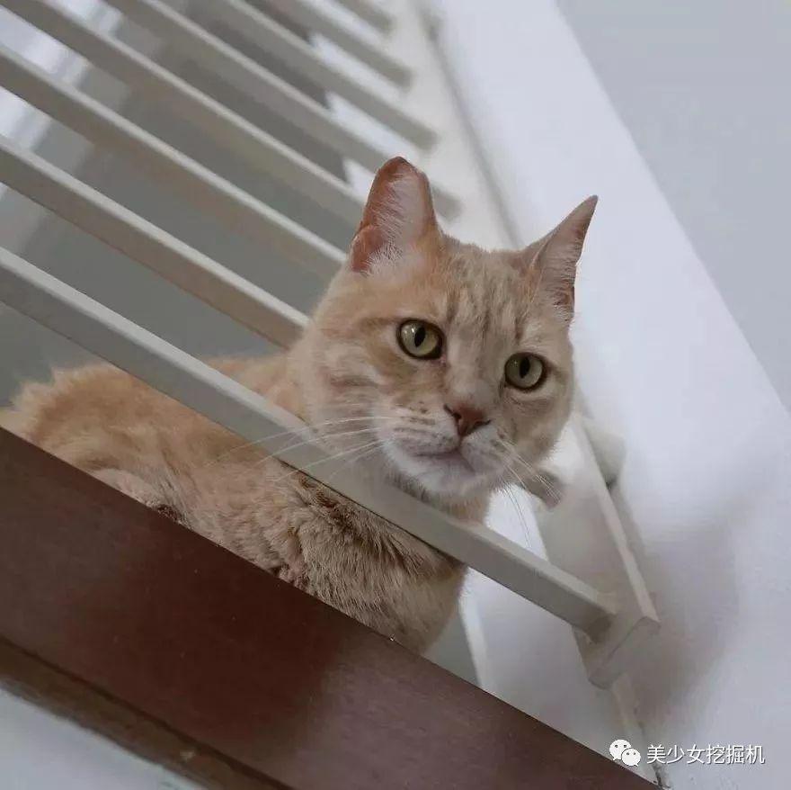 被遗弃、车祸、装假肢,命运多舛却成为ins上超火网红猫
