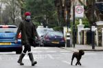 被狗遛了!抖森戴紅帽雙口罩出街 厚毛衣難擋胸肌