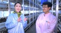 小小的蘑菇可有大学问 主持人实地探访兰考食用菌产业