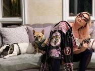 爱犬被偷遛狗员负重伤 LadyGaga愿出50万美金赎回
