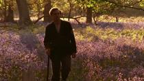 斩获9项奥斯卡提名的《霍华德庄园》与爱拍英国片的美国导演