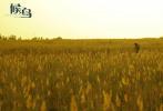 """由王姬、高丽雯母女联袂主演的亲情大片《候鸟》4月16日发布美景系列剧照,祖国河山一览无余。从群山环绕的窄道到一望无际的悠长公路,影片取景地横跨我国六个省八个市,南北魅影尽收眼底。电影中几次上演""""母女历险记"""",为影片增加了悬疑色彩。该片将于4月30日在全国上映,在五一档为观众带来温情一刻!"""