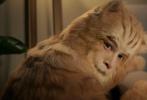 """5月17日,胡歌出演的一支广告片视频曝光,惊喜的是,胡歌在片中出演一只16岁的橘猫""""老黄"""",挑战动物演技,算是其演艺生涯中的一大突破。"""