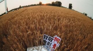 致敬人物传记电影《柳青》 观传统文化与乡村之美