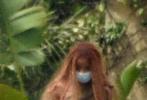 """迪士尼真人版《小美人鱼》电影正在拍摄中,一组片场照曝光。哈里·贝里饰演的小美人鱼""""上岸"""",化身人类,身着绿色长裙,披散着微卷长发,藏身马车之中。"""