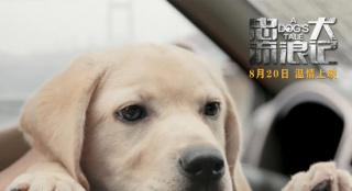 《忠犬流浪记》定档8.20 温情演绎中国版忠犬八公