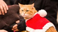 《流浪猫鲍勃2:鲍勃的礼物》定档预告