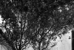 10月13日,邓伦登《时尚先生》十月刊封面大片发布,一组静谧的秋日庭院写真,营造出满满的文艺复古腔调。清贵气质搭配暗纹西装,凸显绅士风貌;针织马甲+衬衫的休闲搭配满满少年感。树影斑驳下,日影婆娑中,与猫为伴,一切都闲情逸致得很。