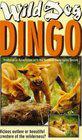 Dikaya sobaka Dingo